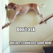 Help Needed?